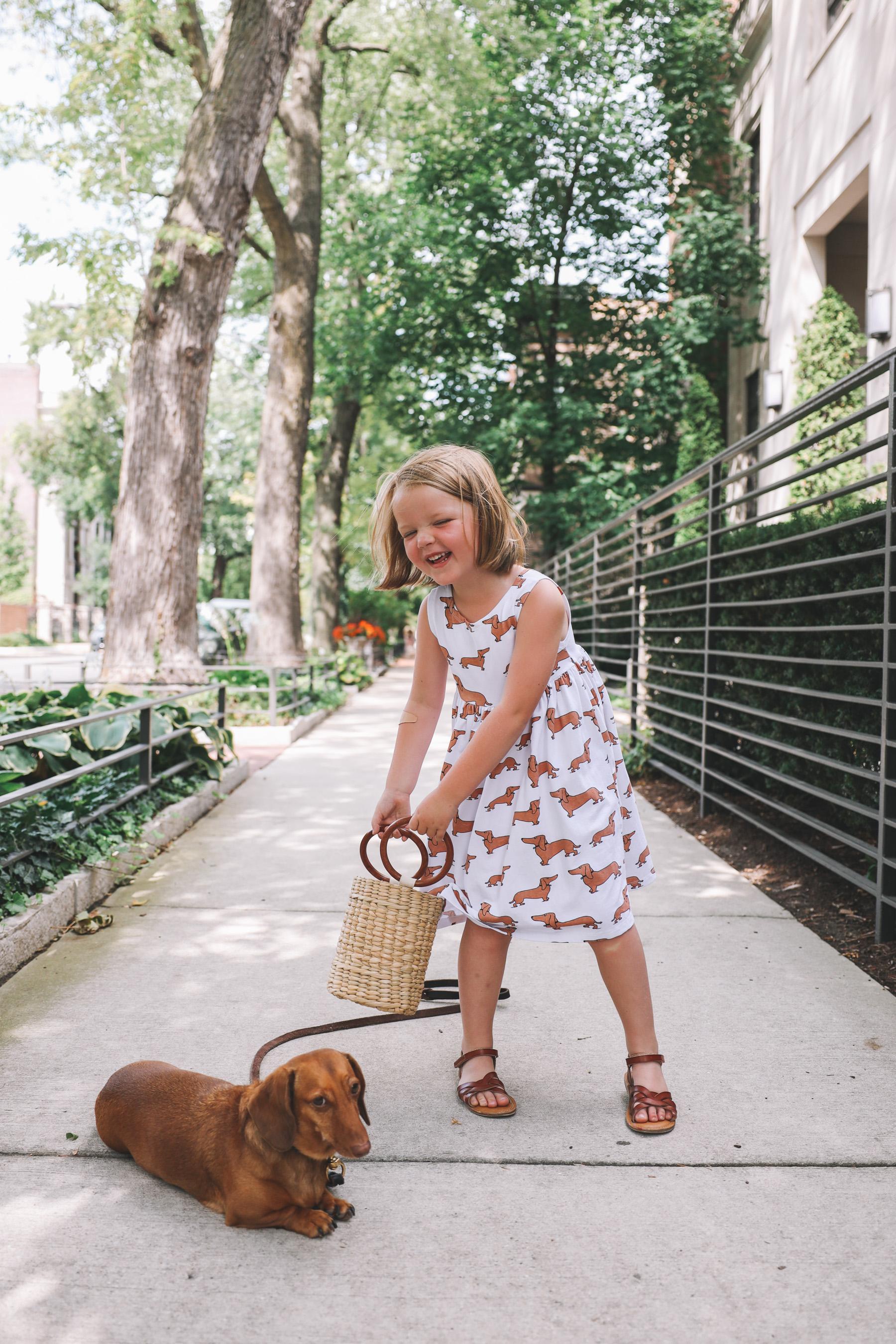 dachshund print clothes