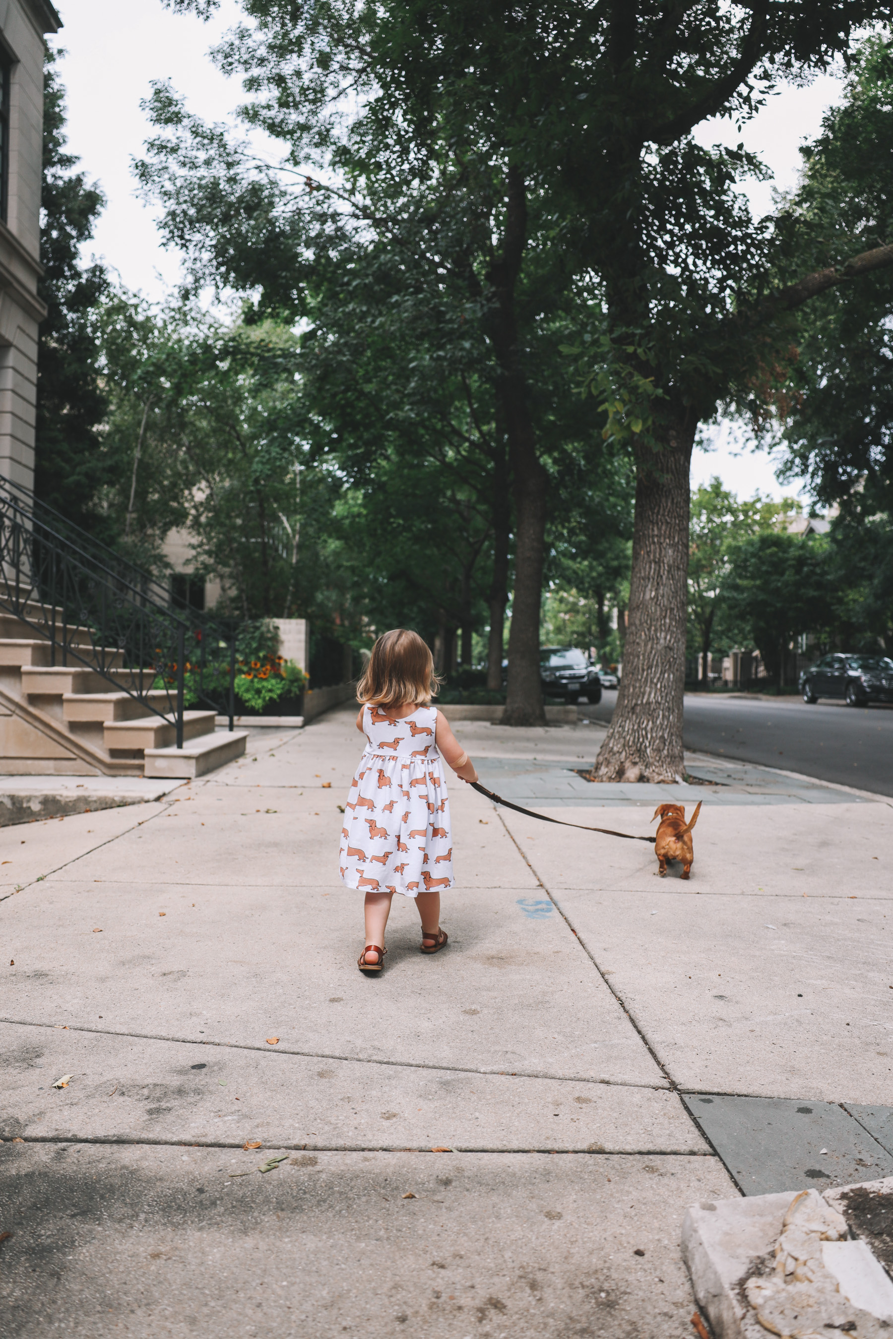 dachshund print apparel for girls