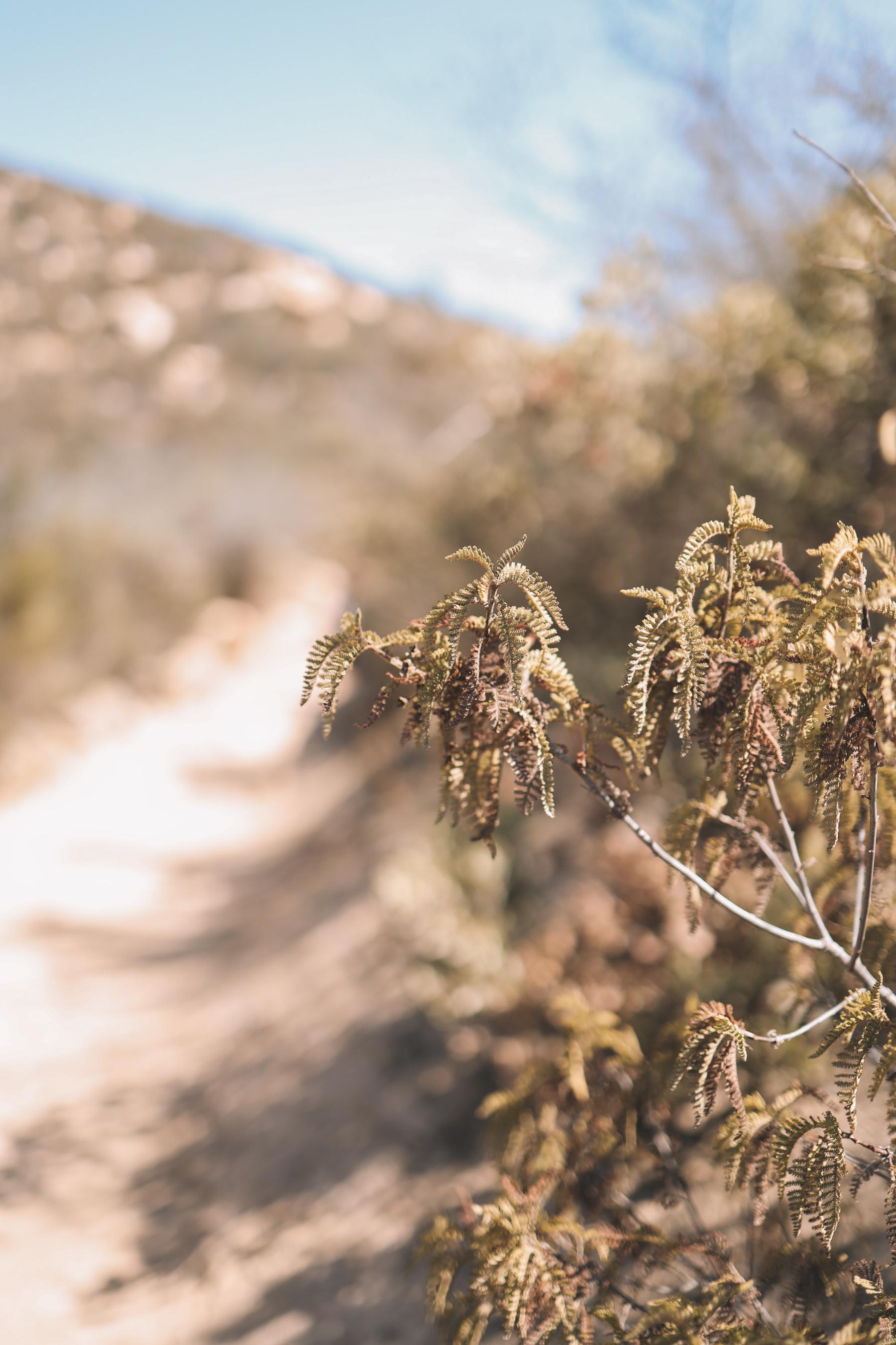 San Diego hiking trails